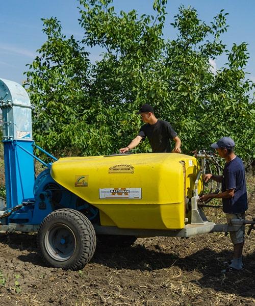 Ореховый сад как инвестиция